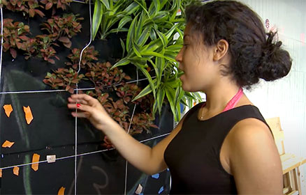 a student adjusts the plantings on a living wall project
